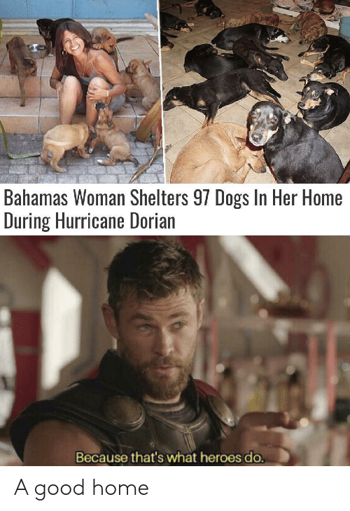 Dogs, Bahamas, and Good: Bahamas Woman Shelters 97 Dogs In Her Home  During Hurricane Dorian  Because that's what heroes do. A good home