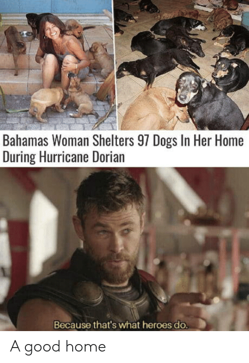 Hurricane: Bahamas Woman Shelters 97 Dogs In Her Home  During Hurricane Dorian  Because that's what heroes do. A good home