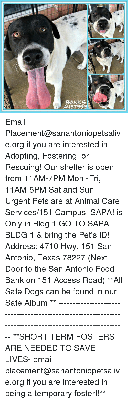 Dogs, Food, and Memes: BANKS  A457999 Email Placement@sanantoniopetsalive.org if you are interested in Adopting, Fostering, or Rescuing!  Our shelter is open from 11AM-7PM Mon -Fri, 11AM-5PM Sat and Sun.  Urgent Pets are at Animal Care Services/151 Campus. SAPA! is Only in Bldg 1 GO TO SAPA BLDG 1 & bring the Pet's ID! Address: 4710 Hwy. 151 San Antonio, Texas 78227 (Next Door to the San Antonio Food Bank on 151 Access Road)  **All Safe Dogs can be found in our Safe Album!** ---------------------------------------------------------------------------------------------------------- **SHORT TERM FOSTERS ARE NEEDED TO SAVE LIVES- email placement@sanantoniopetsalive.org if you are interested in being a temporary foster!!**