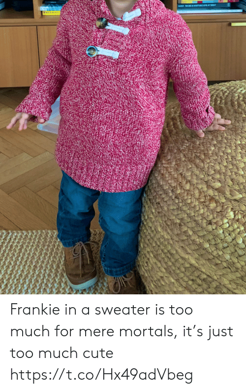 Cute, Memes, and Too Much: BARESTTO ARE AR ACCEPTABLE LEVEL OF TIEA Frankie in a sweater is too much for mere mortals, it's just too much cute https://t.co/Hx49adVbeg