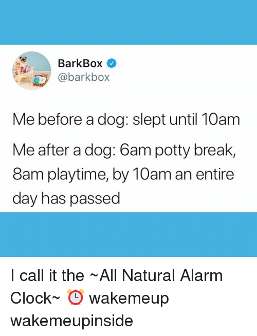 Playtime: BarkBox  @barkbo>x  Me before a dog: slept until 10am  Me after a dog: 6am potty break,  8am playtime, by 10am an entire  day has passed I call it the ~All Natural Alarm Clock~ ⏰ wakemeup wakemeupinside