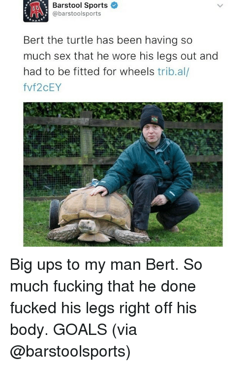 Barstool Sports: Barstool Sports  @barstoolsports  Bert the turtle has been having so  much sex that he wore his legs out and  had to be fitted for wheels  trib.al  fvf2CEY Big ups to my man Bert. So much fucking that he done fucked his legs right off his body. GOALS (via @barstoolsports)