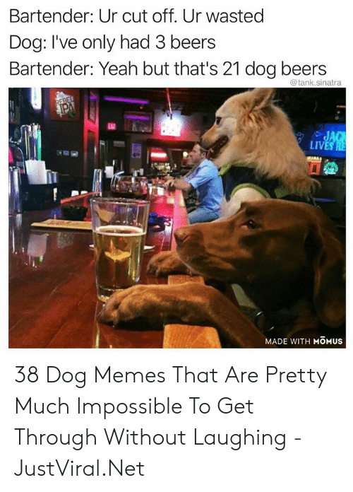 Memes, Yeah, and Net: Bartender: Ur cut off. Ur wasted  Dog: I've only had 3 beers  Bartender: Yeah but that's 21 dog beers  @tank.sinatra  REBEL  PA  EAT  JAG  LIVES HE  MADE WITH MOMUS 38 Dog Memes That Are Pretty Much Impossible To Get Through Without Laughing - JustViral.Net
