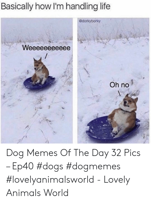 Animals, Dogs, and Life: Basically how I'm handling life  Gdorkyborky  Oh no Dog Memes Of The Day 32 Pics – Ep40 #dogs #dogmemes #lovelyanimalsworld - Lovely Animals World