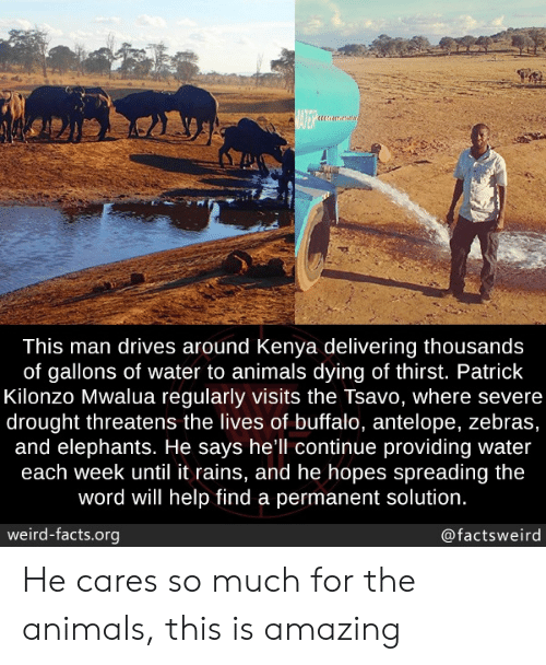 spreading: BATER  This man drives around Kenya delivering thousands  of gallons of water to animals dying of thirst. Patrick  Kilonzo Mwalua regularly visits the Tsavo, where severe  drought threatens the lives of buffalo, antelope, zebras,  and elephants. He says hell continue providing water  each week until it rains, and he hopes spreading the  word will help find a permanent solution.  weird-facts.org  @factsweird He cares so much for the animals, this is amazing