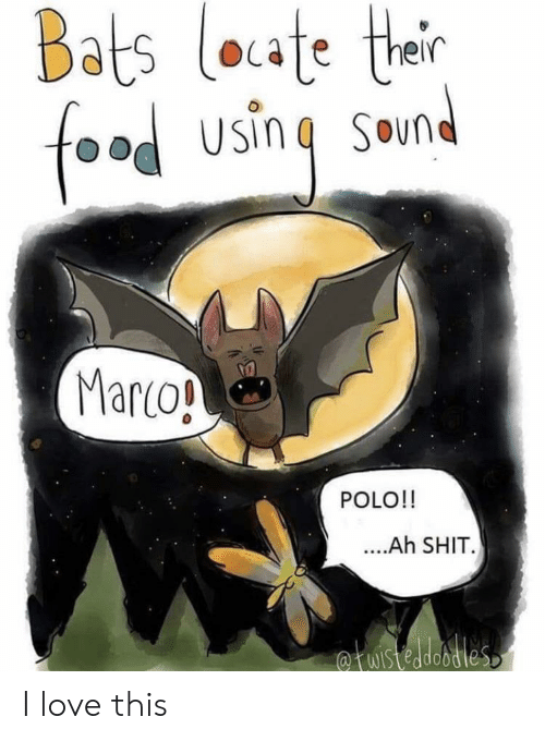 bats: Bats loate ther  food using  SOun  Marco!  POLO!!  ....Ah SHIT.  fuistedobdies I love this