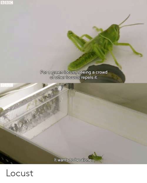 Being Alone, Bbc, and Green: BBC  For a green locust, seeing a crowd  of other locusts repels it.  BEC  It wants to be alone. Locust