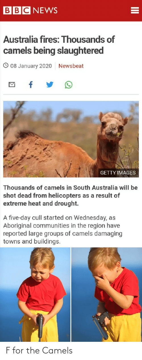 News Australia: BBC NEWS  Australia fires: Thousands of  camels being slaughtered  08 January 2020  Newsbeat  GETTY IMAGES  Thousands of camels in South Australia will be  shot dead from helicopters as a result of  extreme heat and drought.  A five-day cull started on Wednesday, as  Aboriginal communities in the region have  reported large groups of camels damaging  towns and buildings. F for the Camels