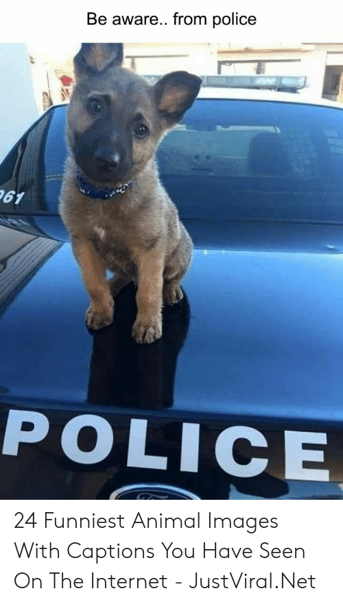 Internet, Police, and Animal: Be aware... from police  61  POLICE 24 Funniest Animal Images With Captions You Have Seen On The Internet - JustViral.Net