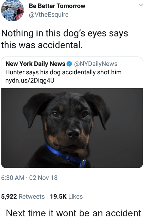 Dogs, New York, and News: Be Better Tomorrow  @VtheEsquire  Nothing in this dog's eyes says  this was accidental  New York Daily News Φ @NYDailyNews  Hunter says his dog accidentally shot him  nydn.us/2Diqg4U  6:30 AM 02 Nov 18  5,922 Retweets 19.5K Likes Next time it wont be an accident