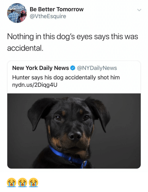 Nydailynews: Be Better Tomorroww  @VtheEsquire  Nothing in this dog's eyes says this was  accidental.  New York Daily News @NYDailyNews  Hunter says his dog accidentally shot him  nydn.us/2Diag4U 😭😭😭