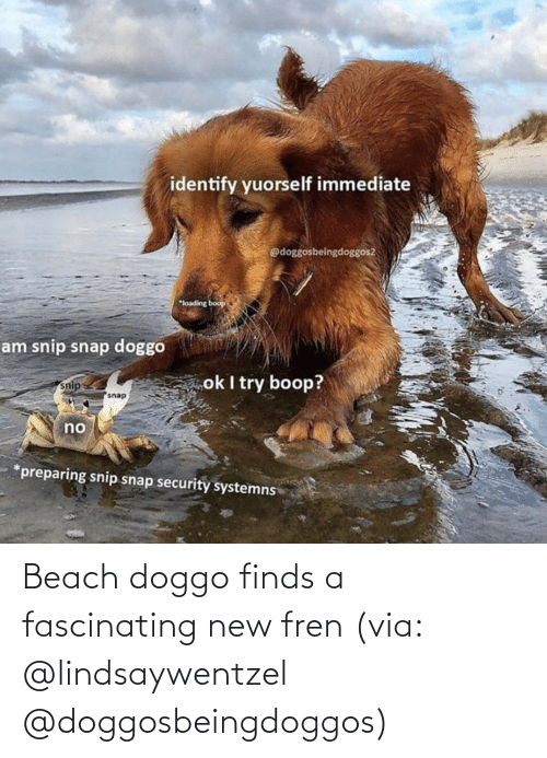 fascinating: Beach doggo finds a fascinating new fren (via: @lindsaywentzel @doggosbeingdoggos)