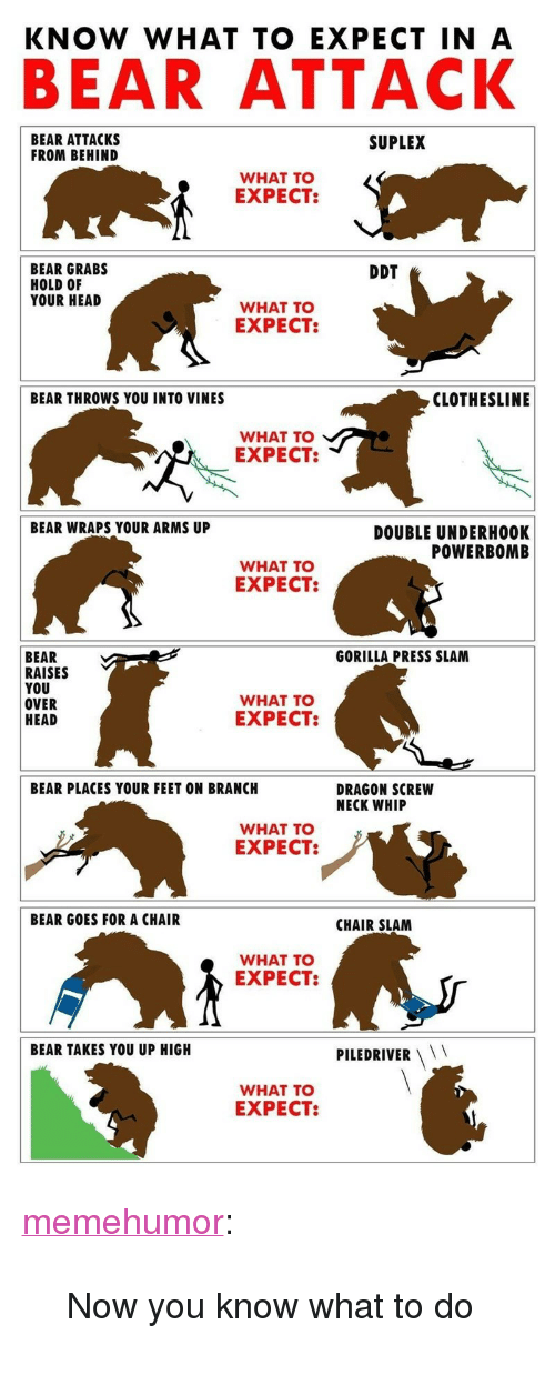 """piledriver: BEAR ATTACK  BEAR ATTACKS  FROM BEHIND  SUPLEX  WHAT TO  EXPECT  BEAR GRABS  HOLD OF  YOUR HEAD  DDT  WHAT TO  EXPECT  BEAR THROWS YOU INTO VINES  CLOTHESLINE  WHAT TO  EXPECT:  BEAR WRAPS YOUR ARMS UP  DOUBLE UNDERH0OK  POWERBOMB  WHAT TO  EXPECT:  BEAR  RAISES  YOU  OVER  HEAD  GORILLA PRESS SLAM  WHAT TO  EXPECT:  BEAR PLACES YOUR FEET ON BRANCH  DRAGON SCREW  NECK WHIP  WHAT TO  EXPECT:  BEAR GOES FOR A CHAIR  CHAIR SLAM  WHAT TO  EXPECT:  BEAR TAKES YOU UP HIGH  PILEDRIVER  WHAT TO  EXPECT: <p><a href=""""http://memehumor.net/post/168861650307/now-you-know-what-to-do"""" class=""""tumblr_blog"""">memehumor</a>:</p>  <blockquote><p>Now you know what to do</p></blockquote>"""