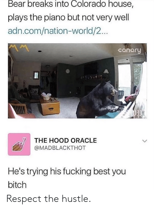 Colorado: Bear breaks into Colorado house,  plays the piano but not very well  adn.com/nation-world/2...  canary  THE HOOD ORACLE  @MADBLACKTHOT  He's trying his fucking best you  bitch Respect the hustle.