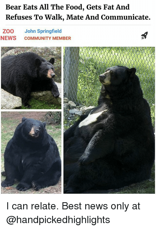 bests: Bear Eats All The Food, Gets Fat And  Refuses To Walk, Mate And Communicate.  ZOO John Springfield  NEWS COMMUNITY MEMBER I can relate. Best news only at @handpickedhighlights