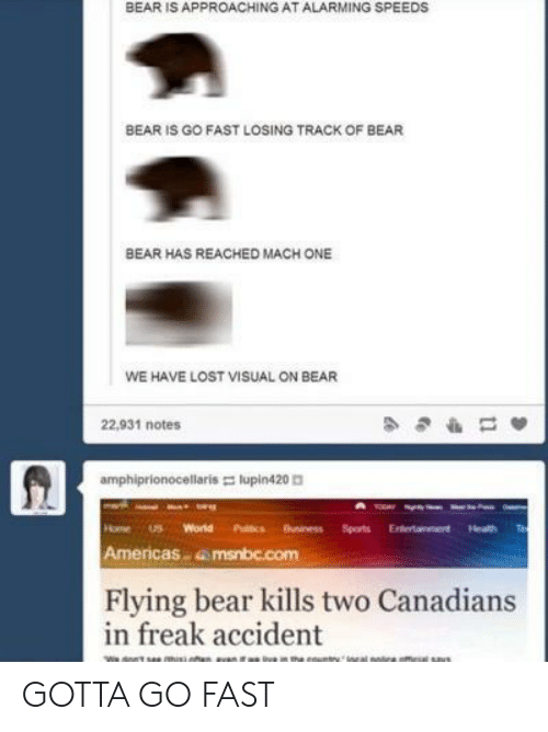 Sports, Lost, and Bear: BEAR IS APPROACHING AT ALARMING SPEEDS  BEAR IS GO FAST LOSING TRACK OF BEAR  BEAR HAS REACHED MACH ONE  WE HAVE LOST VISUAL ON BEAR  22,931 notes  amphiprionocellaris lupin420  HomeS World Puitcs Buniness Sports Eterainment Heath  Americas amsnbc.com  Flying bear kills two Canadians  in freak accident GOTTA GO FAST