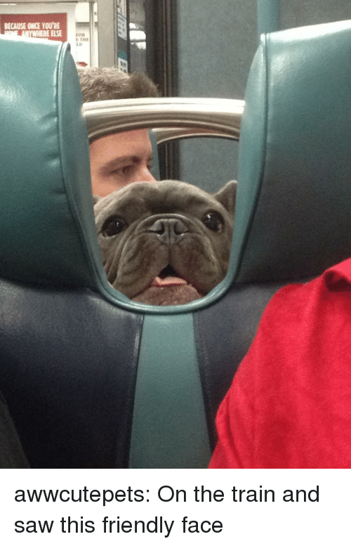 Saw, Tumblr, and Blog: BECAUSE ONCE YOU'RE  YWHERE ELSE  LD awwcutepets: On the train and saw this friendly face