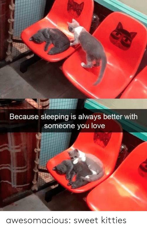 Kitties, Love, and Tumblr: Because sleeping is always better with  someone you love awesomacious:  sweet kitties