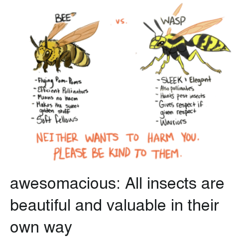 Nei: BEE  WASP  SLEEK Eleaont  cient Polli nators  Also pollinales  Hants Pest insects  Gives respeci  given respact  Muons no harm  stutF  Pellows  NEI THER WANTS TO HARM YOU  LEASE BE KIND TO THEM awesomacious:  All insects are beautiful and valuable in their own way