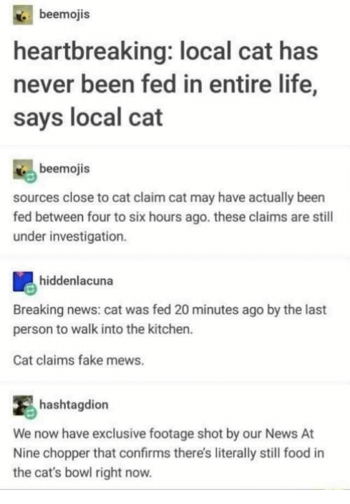 We Now: beemojis  heartbreaking: local cat has  never been fed in entire life,  says local cat  beemojis  sources close to cat claim cat may have actually been  fed between four to six hours ago. these claims are stil  under investigation.  hiddenlacuna  Breaking news: cat was fed 20 minutes ago by the last  person to walk into the kitchen.  Cat claims fake mews.  hashtagdion  We now have exclusive footage shot by our News At  Nine chopper that confirms there's literally still food in  the cat's bowl right now.