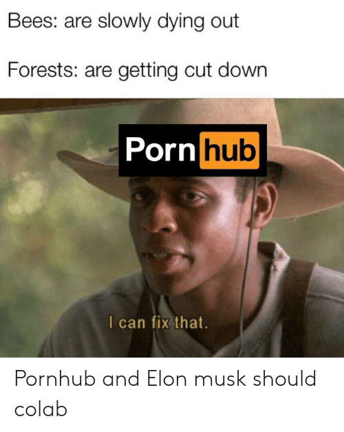 Porn Hub, Pornhub, and Porn: Bees: are slowly dying out  Forests: are getting cut down  Porn hub  I can fix that Pornhub and Elon musk should colab