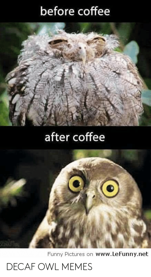owl: before coffee  after coffee  www.LeFunny.net  Funny Pictures on DECAF OWL MEMES