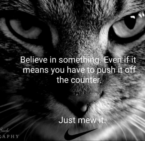 Memes, 🤖, and Push: Believe in something. Eventif it  means you have to push it off  the counter  Just mewit  APHY