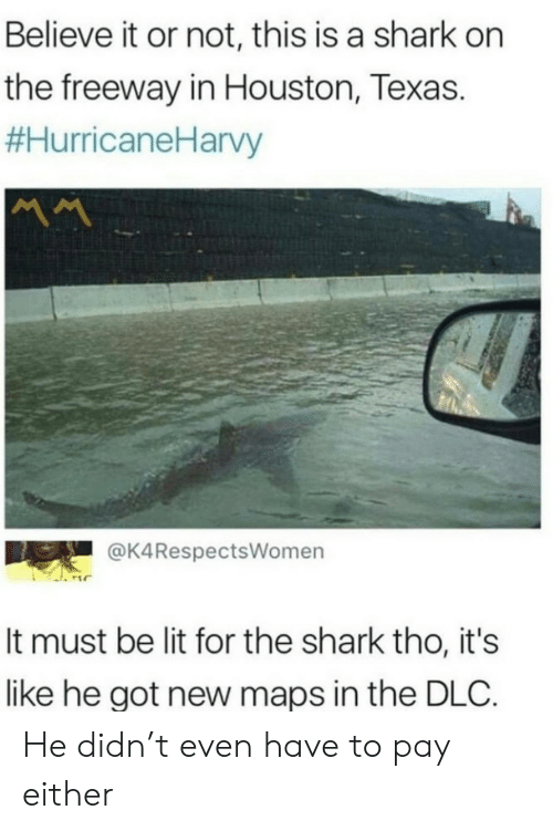 Lit, Shark, and Houston: Believe it or not, this is a shark on  the freeway in Houston, Texas.  #HurricaneHarvy  MM  @K4RespectsWomen  It must be lit for the shark tho, it's  like he got new maps in the DLC. He didn't even have to pay either