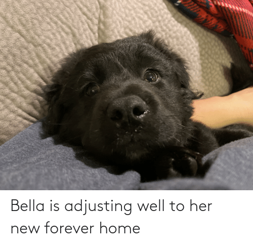 bella: Bella is adjusting well to her new forever home