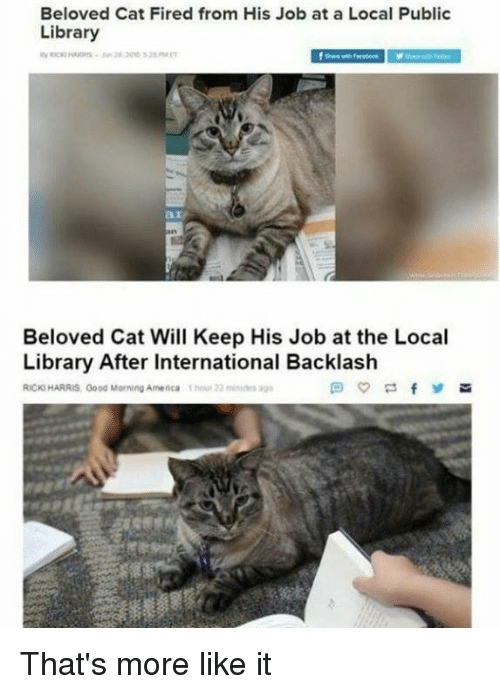 public library: Beloved Cat Fired from His Job at a Local Public  Library  ar  Beloved Cat Will Keep His Job at the Local  Library After International Backlash  RICKI HARRIS, Good Morning America 1hou 22 s ag That's more like it