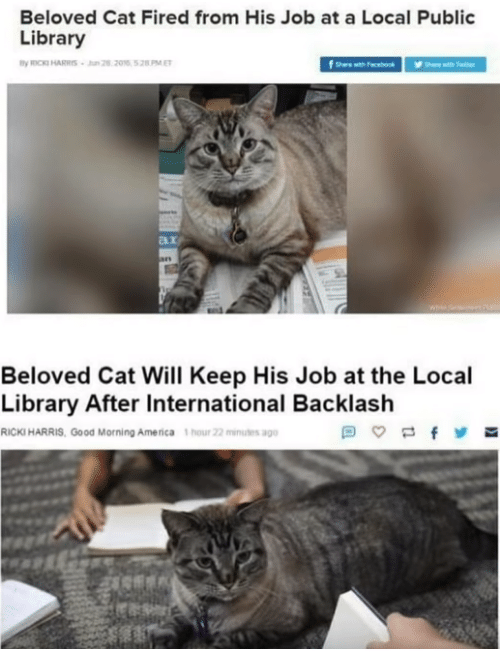 America, Memes, and Good Morning: Beloved Cat Fired from His Job at a Local Public  Library  ROCKI HARRIS-n 22016 528PME  here wth fecebook  an  Beloved Cat Will Keep His Job at the Local  Library After International Backlash  RICKI HARRIS, Good Morning America 1 hour 22 minules ago