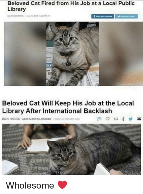 public library: Beloved Cat Fired from His Job at a Local Public  Library  Beloved Cat Will Keep His Job at the Local  Library After International Backlash  RICKS HARRIS, Good Morning Amenca 1  22u Wholesome ❤️
