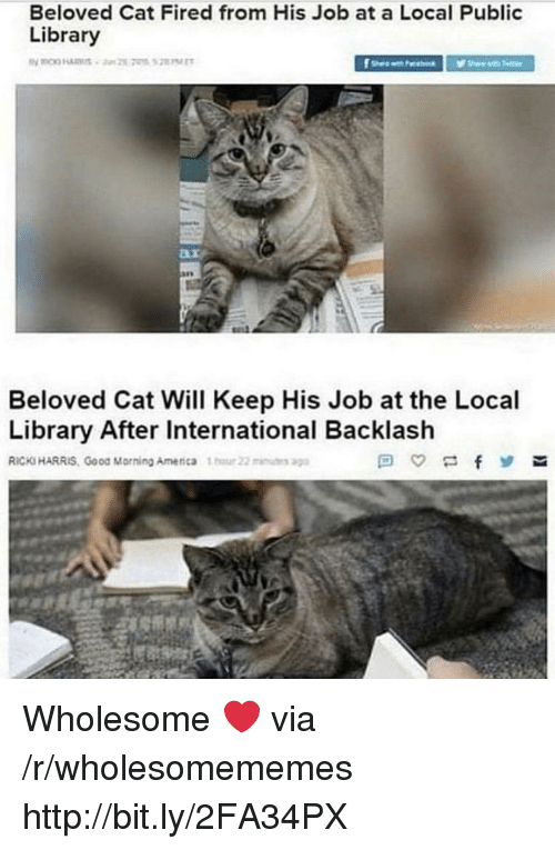 public library: Beloved Cat Fired from His Job at a Local Public  Library  Beloved Cat Will Keep His Job at the Local  Library After International Backlash  RICKS HARRIS, Good Morning Amenca 1  22u Wholesome ❤️ via /r/wholesomememes http://bit.ly/2FA34PX