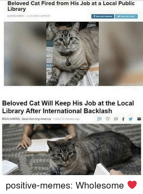 public library: Beloved Cat Fired from His Job at a Local Public  Library  Beloved Cat Will Keep His Job at the Local  Library After International Backlash  RICKS HARRIS, Good Morning Amenca 1  22u positive-memes:  Wholesome ❤️