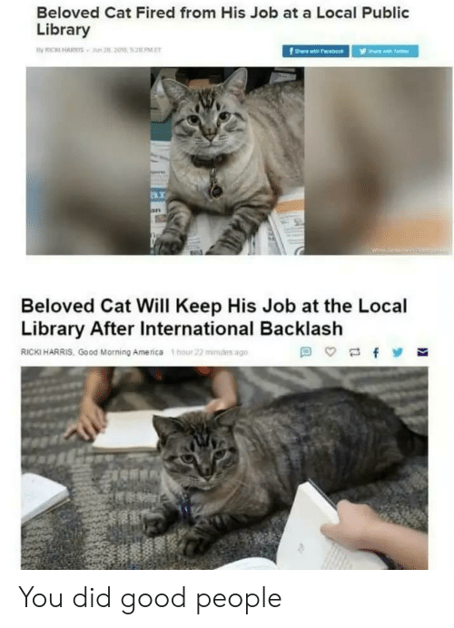 public library: Beloved Cat Fired from His Job at a Local Public  Library  B.i  Beloved Cat Will Keep His Job at the Local  Library After International Backlash  RICKI HARRIS, Good Morning America hour 22 mius ago You did good people
