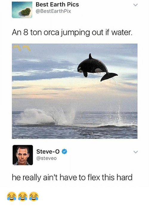 orca: Best Earth Pics  @BestEarthPix  An 8 ton orca jumping out if water.  Steve-O  @steveo  he really ain't have to flex this hard 😂😂😂