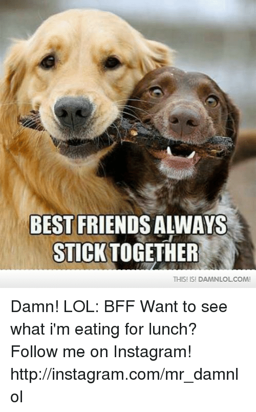 Stick Together: BEST FRIENDS ALWAYS  STICK TOGETHER  THIS! ISI DAMNLOLCOM! Damn! LOL: BFF  Want to see what i'm eating for lunch? Follow me on Instagram! http://instagram.com/mr_damnlol