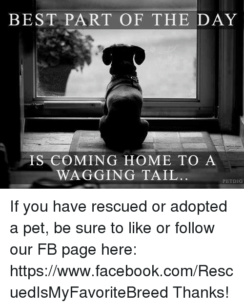 Memes, Coming Home, and 🤖: BEST PART OF THE DAY  IS COMING HOME TO A  WAGGING TAIL  PET DIG If you have rescued or adopted a pet, be sure to like or follow our FB page here: https://www.facebook.com/RescuedIsMyFavoriteBreed Thanks!
