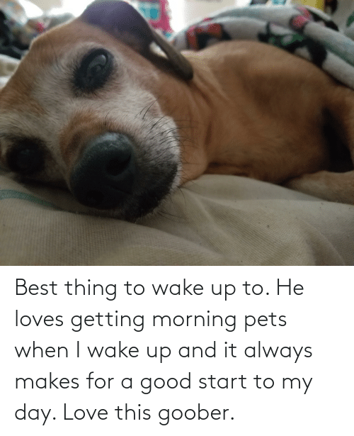goober: Best thing to wake up to. He loves getting morning pets when I wake up and it always makes for a good start to my day. Love this goober.