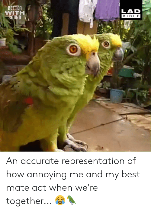Dank, Best, and Bible: BETTER  WITH  LAD  BIBLE  ND An accurate representation of how annoying me and my best mate act when we're together... 😂🦜