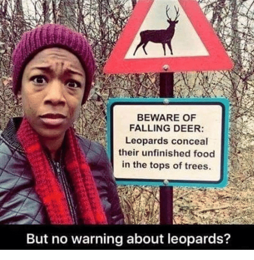 tops: BEWARE OF  FALLING DEER:  Leopards conceal  their unfinished food  in the tops of trees.  But no warning about leopards?