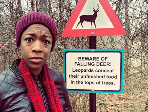 Food: BEWARE OF  FALLING DEER:  Leopards conceal  their unfinished food  in the tops of trees.