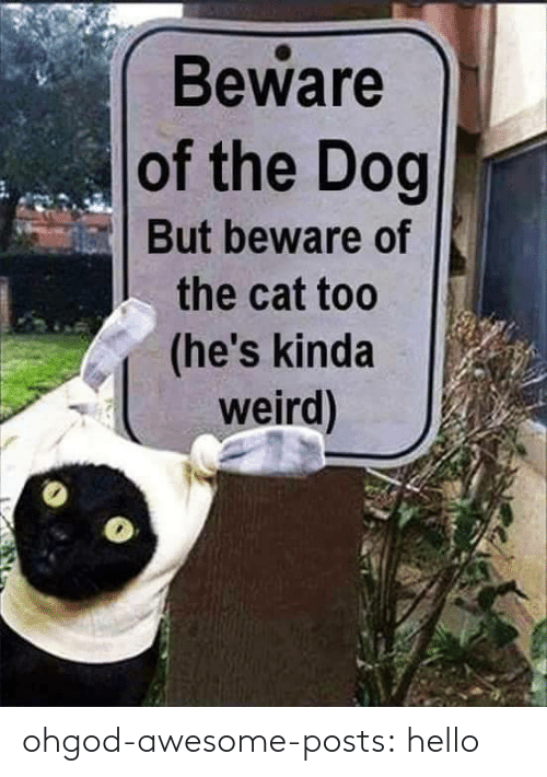 Posts: Beware  of the Dog  But beware of  the cat too  (he's kinda  weird) ohgod-awesome-posts: hello