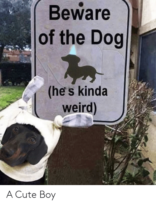cute boy: Beware  of the Dog  (he s kinda  weird) A Cute Boy