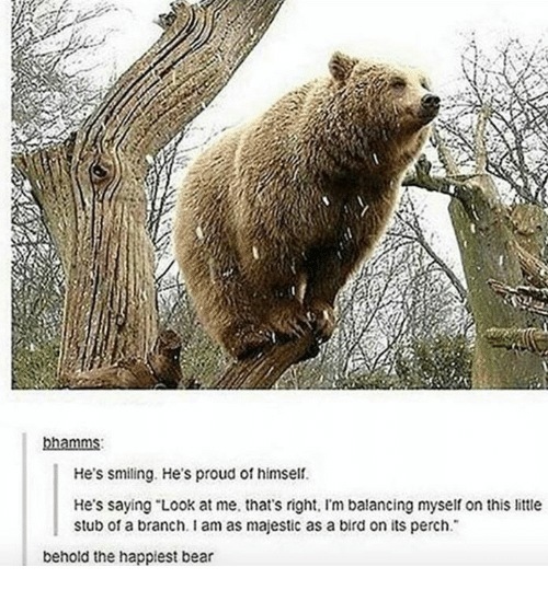 """Offed Himself: bhamms:  He's smiling. He's proud of himself.  He's saying """"Look at me, that's right. Im balancing myself on this little  stub of a branch. I am as majestic as a bird on its perch.  behold the happiest bear"""
