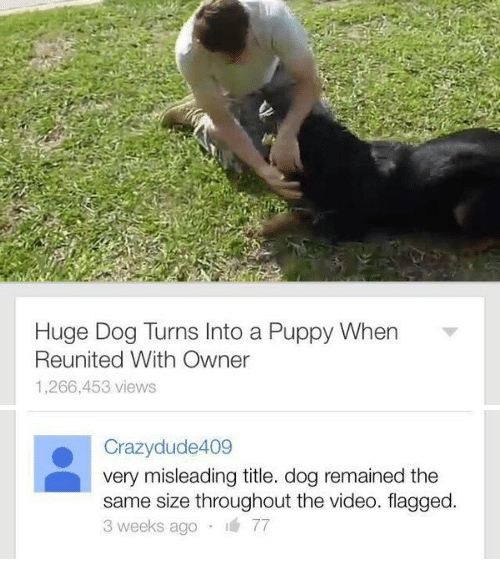 Puppy, Video, and Dog: bi  Huge Dog Turns Into a Puppy When  Reunited With Owner  1,266,453 views   Crazydlude409  very misleading title. dog remained the  same size throughout the video. flagged.  weeks ago I
