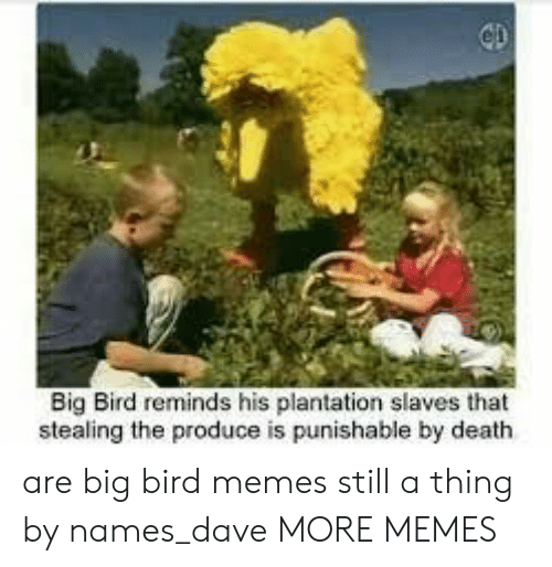 Dank, Memes, and Target: Big Bird reminds his plantation slaves that  stealing the produce is punishable by death are big bird memes still a thing by names_dave MORE MEMES