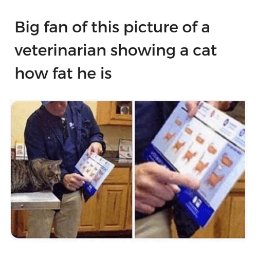 Veterinarian: Big fan of this picture of a  veterinarian showing a cat  how fat he is