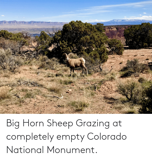 Horn: Big Horn Sheep Grazing at completely empty Colorado National Monument.