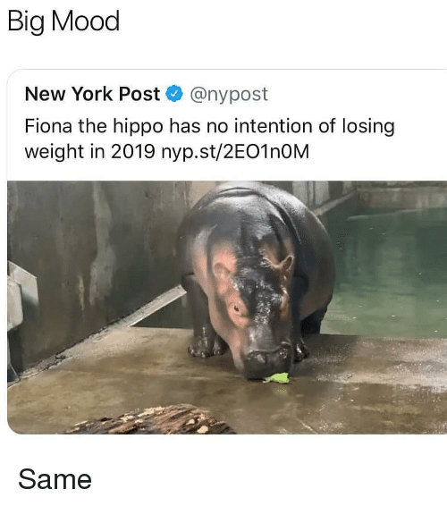 Memes, Mood, and New York: Big Mood  New York Post @nypost  Fiona the hippo has no intention of losing  weight in 2019 nyp.st/2EO1nOM Same